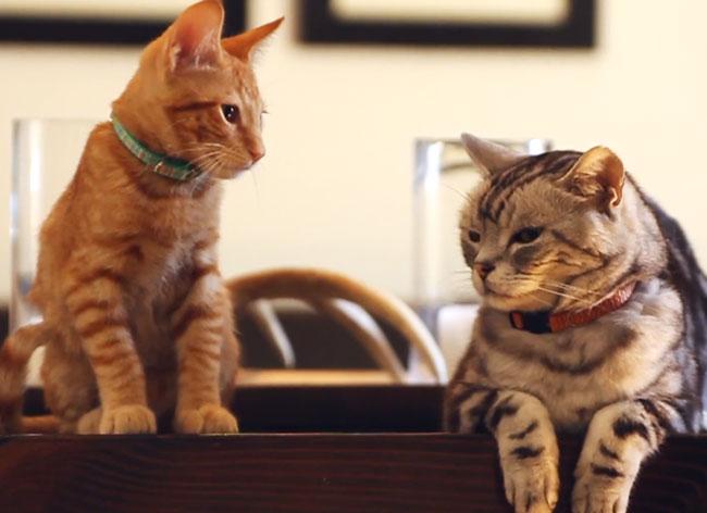 , Dans cette Pub vous Allez enfin Savoir ce que les Chats Pensent des Chiens