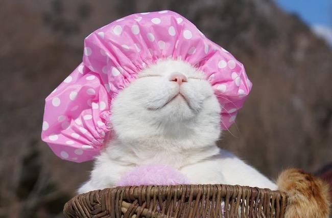 """Résultat de recherche d'images pour """"chat zen"""""""