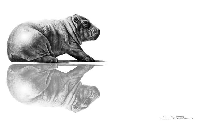 david filer dessin crayon afrique animaux sauvages 11 - Avec ses Crayons, David Filer Illustre avec Réalisme la Vie Sauvage en Afrique