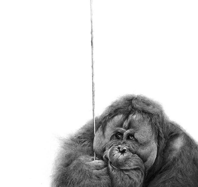 david filer dessin crayon afrique animaux sauvages 12 - Avec ses Crayons, David Filer Illustre avec Réalisme la Vie Sauvage en Afrique