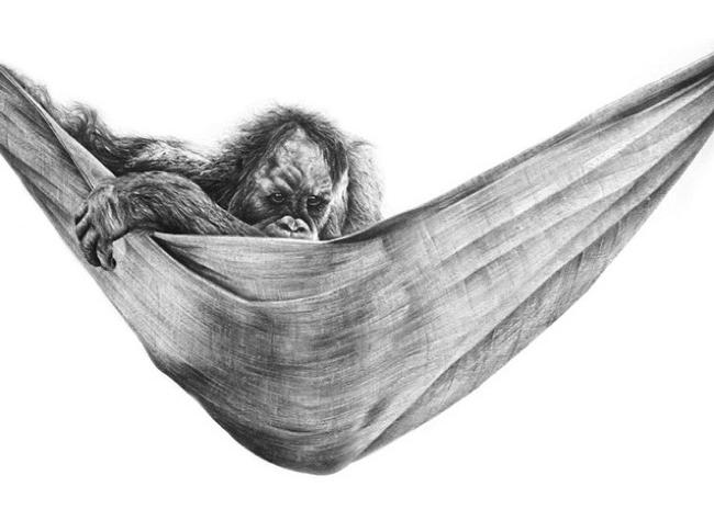 david filer dessin crayon afrique animaux sauvages 13 - Avec ses Crayons, David Filer Illustre avec Réalisme la Vie Sauvage en Afrique