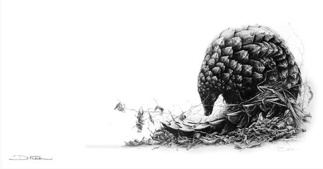 david filer dessin crayon afrique animaux sauvages 3 - Avec ses Crayons, David Filer Illustre avec Réalisme la Vie Sauvage en Afrique