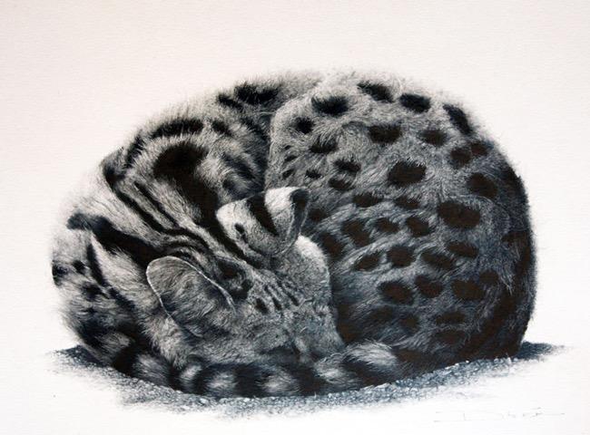 david filer dessin crayon afrique animaux sauvages 6 - Avec ses Crayons, David Filer Illustre avec Réalisme la Vie Sauvage en Afrique