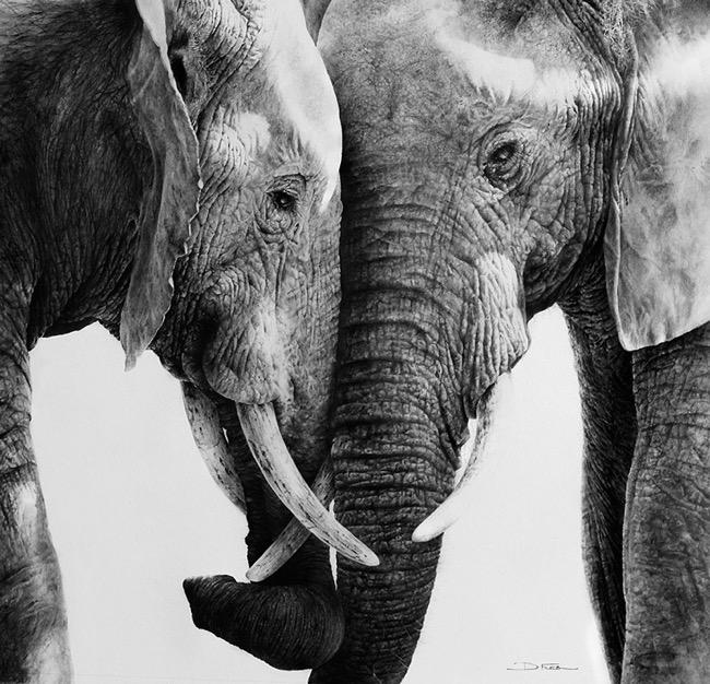 david filer dessin crayon afrique animaux sauvages 8 - Avec ses Crayons, David Filer Illustre avec Réalisme la Vie Sauvage en Afrique