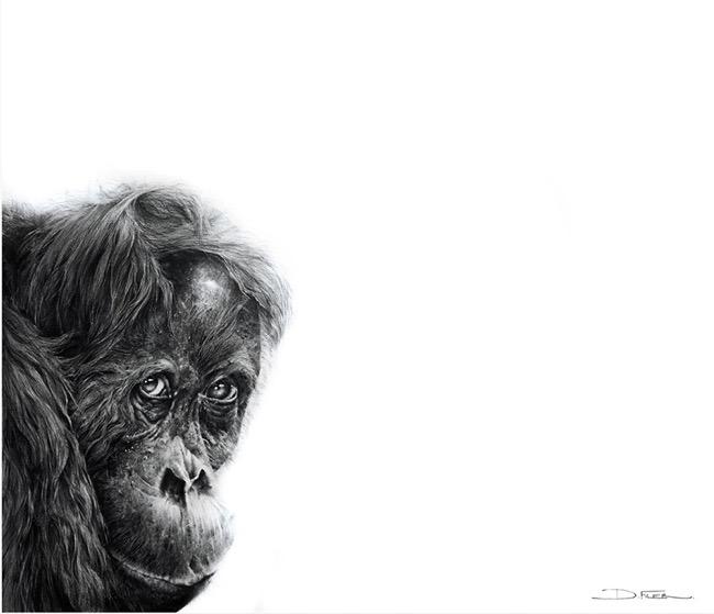 david filer dessin crayon afrique animaux sauvages 9 - Avec ses Crayons, David Filer Illustre avec Réalisme la Vie Sauvage en Afrique