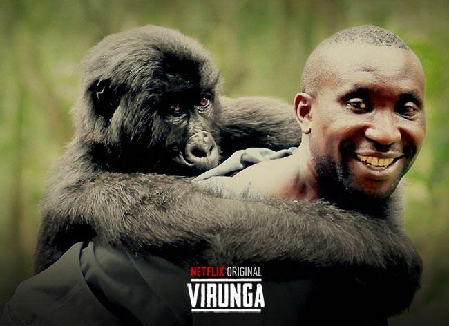 , Virunga, le Film qui Denonce les Massacres des Gorilles au Congo (video)