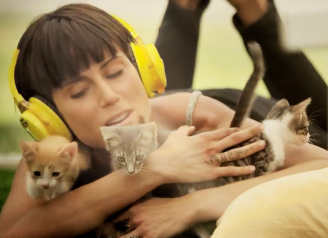 , Invasion de Chatons, la Meilleure Méditation Anti-Stress (Video)