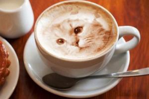 latte-art-portraits-chat-cafe-capuccino-lait-001