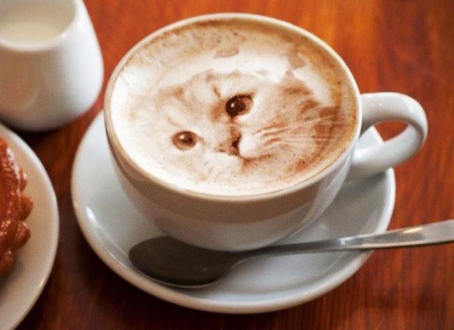 latte art portraits chat cafe capuccino lait 001 - Elle Dessine des Chats Hyper Realistes dans son Café