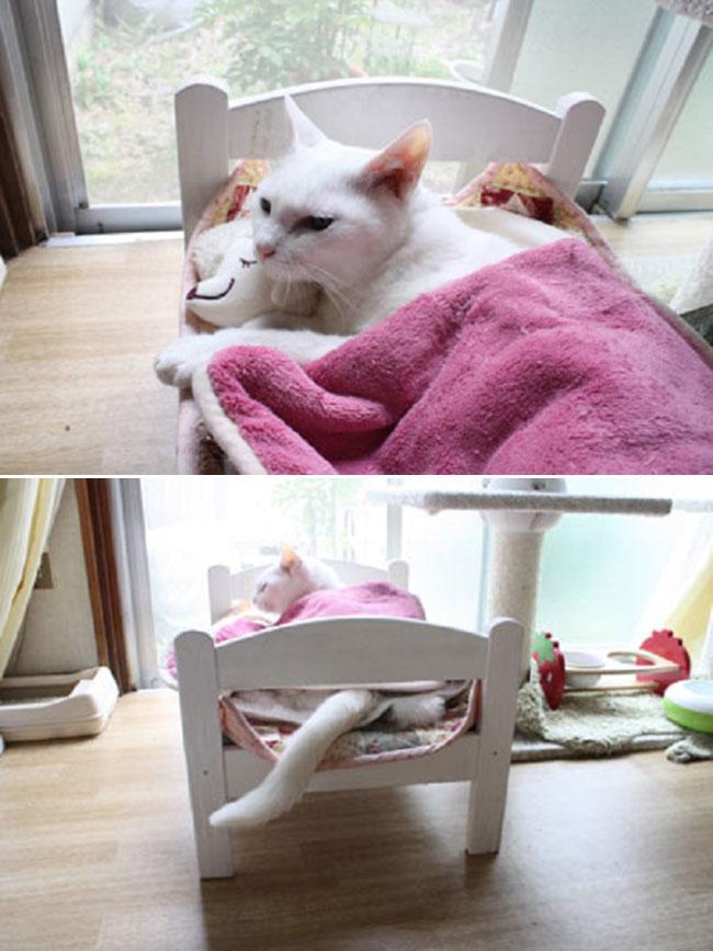 , Les Chats ont enfin Trouvé leur Lit au Rayon Poupée d'IKEA