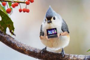 birds-oiseaux-asus-t100-pub-tablette-hybride-2