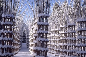 giuliano-mauri-arbres-cathedral-cattedrale-vegetale-foret-3