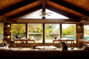 cat-house-kings-sanctuaire-chats-usa-refuge-0