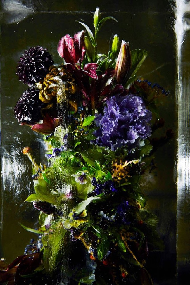 , Bouquets de Fleurs Exotiques dans des Ecrins de Glace