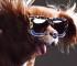 toast-lunettes-soleil-campagne-karen-walker-ete-2015-7