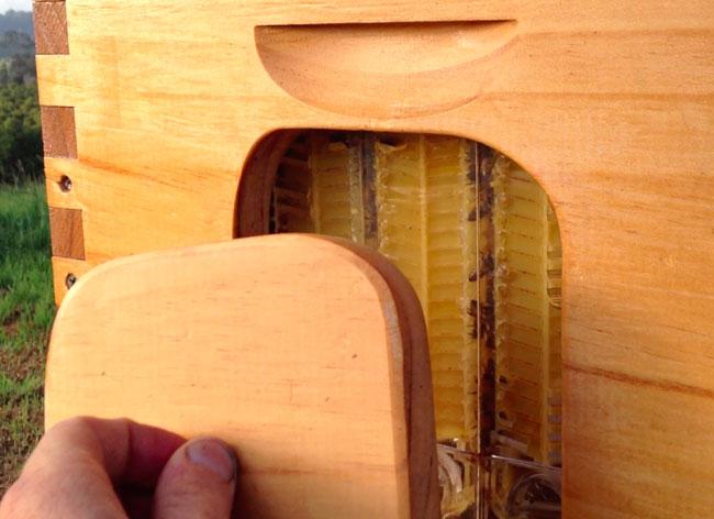 flow hive stuart abeille ruche recolte, Ruche Flow Hive, Récolter le Miel sans Déranger les Abeilles (Video)