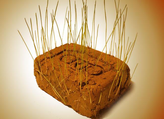 , Offrez un Jardin avec cette Brique de Terre Pleine de Graines