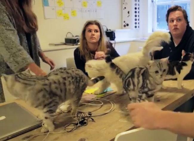 , Travailler avec des Chats au Quotidien Met une Ambiance de Folie au Bureau (video)