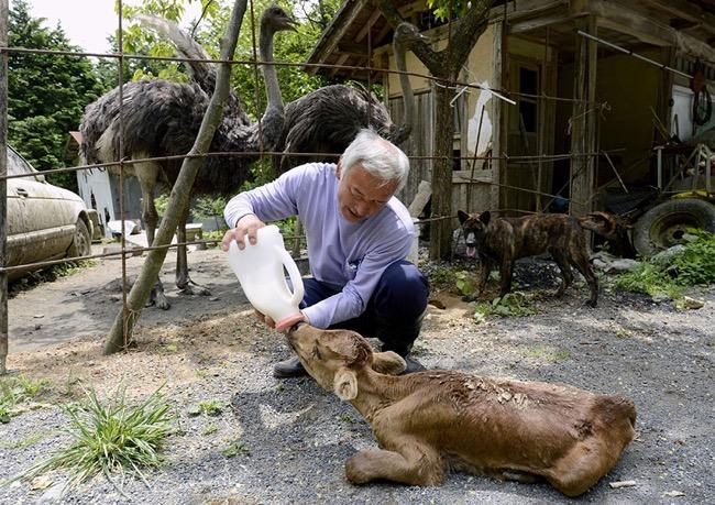 , Naoto Retourne a Fukushima pour Nourrir les Animaux Abandonnés