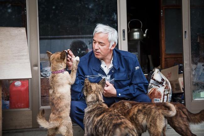ange gardien animaux abandonnes catastrophe fukushima japon 8 - Naoto Retourne a Fukushima pour Nourrir les Animaux Abandonnés