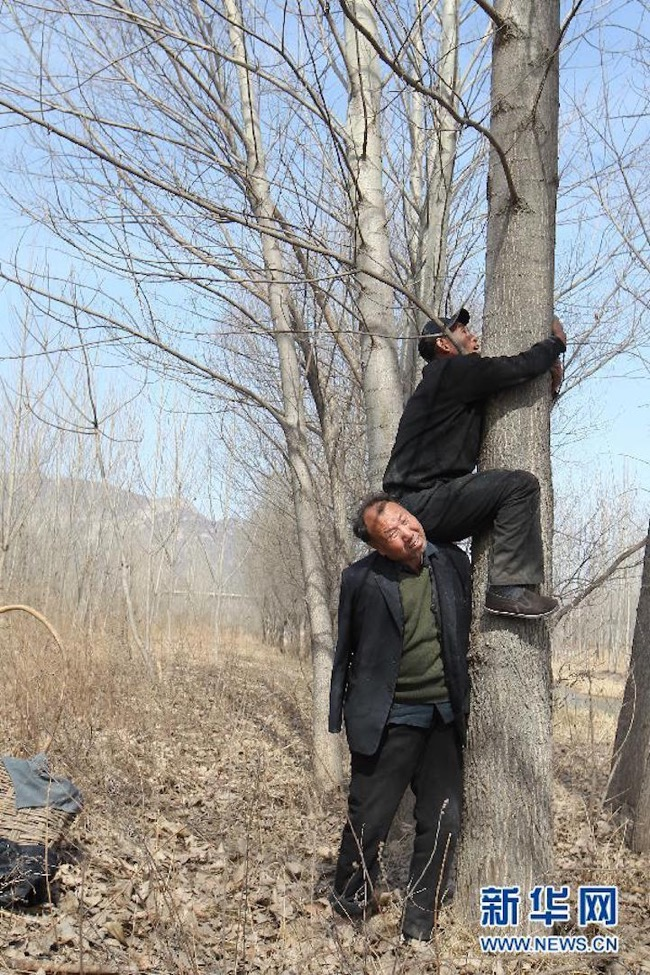 jia-haixia-jia-wenqi-elderly-handicape-plante-arbres-chine-6