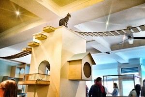 maison-de-moggy-cat-cafe-ecosse-splintr-4