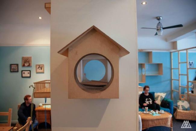 , Le Premier Café à Chats Ouvre ses Portes à Edimbourg en Ecosse