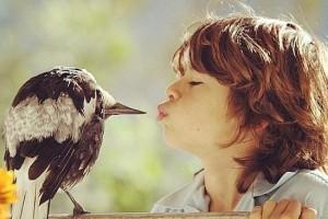 penguin-pie-oiseau-apprivoisee-bloom-australie-1