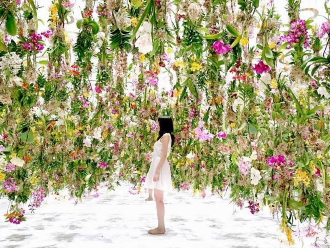 , Evasion Printanière à Tokyo sous 2300 Fleurs en Suspension (video)