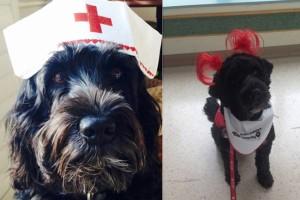 chien-therapie-moxie-chien-sourire-enfants-hopital-1