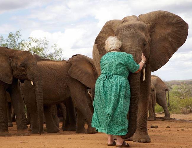 david-sheldrick-wildlife-trust-elephants-orphelins-kenya-1