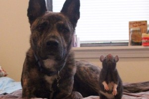 rat-riff-chien-osiris-amis-12