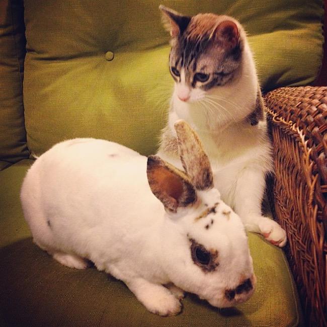 , Roux, le Chat Kangourou devient la Nouvelle Star d'Instagram