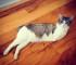 roux-chat-deux-pattes-handicape-instagram-2