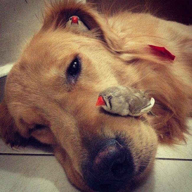 , Ce Chien, ce Hamster et ces Perruches sont les Meilleurs Amis du Monde