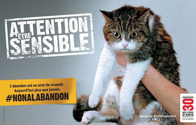 , Les Chiens et les Chats sont des Etres Sensibles #NONALABANDON cet Eté (Video)