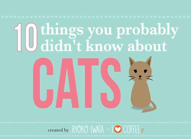 chats infographie ryoko iwata 1 - 10 Faits Inédits sur les Chats que vous Ignorez ! (infographie)
