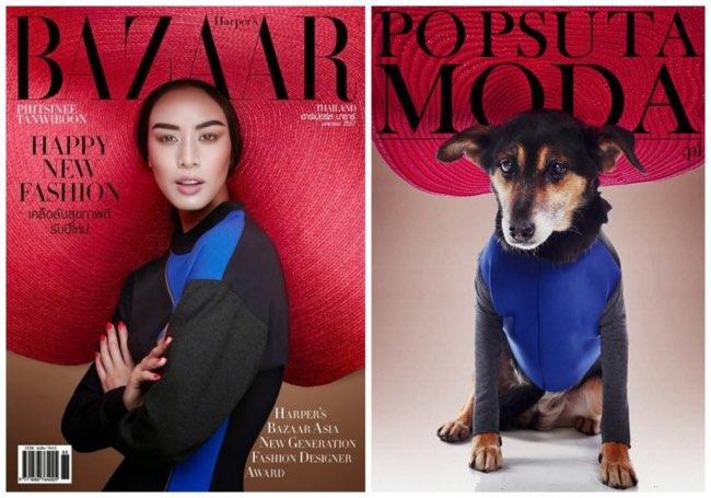 , Top Modeles d'un Jour, ces Chiens ont Vite Trouvé un Foyer