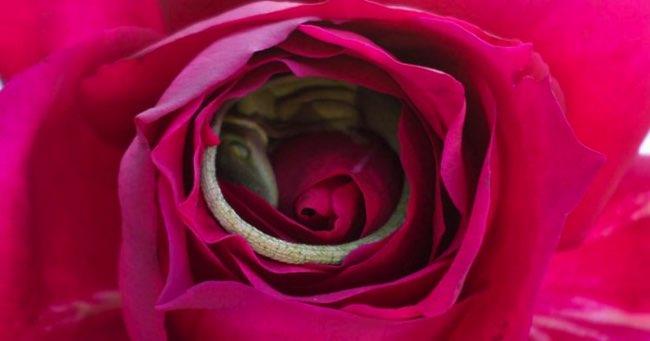 , On lui Offre une Rose et ce qu'elle Trouve dans les Petales est encore plus Adorable