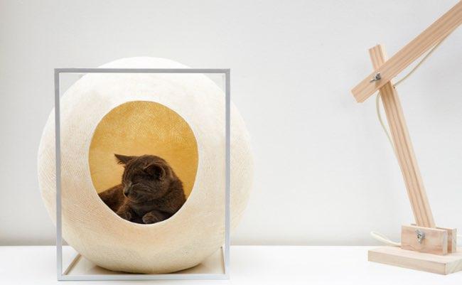 , Votre Chat va Disparaître dans cette Douillette Bulle