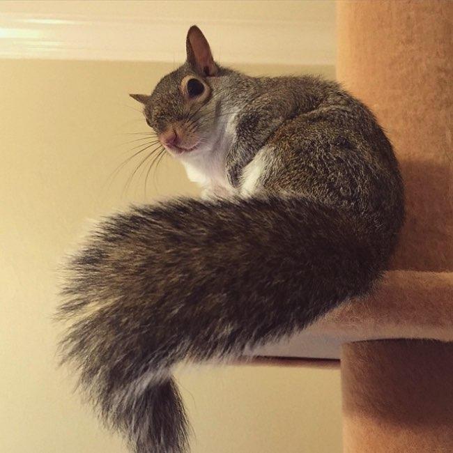 rescape ecureuil jill instagram 2 - Sauvé in Extremis cet Ecureuil Profite de sa Nouvelle Vie
