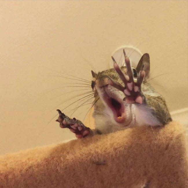 rescape ecureuil jill instagram 3 - Sauvé in Extremis cet Ecureuil Profite de sa Nouvelle Vie
