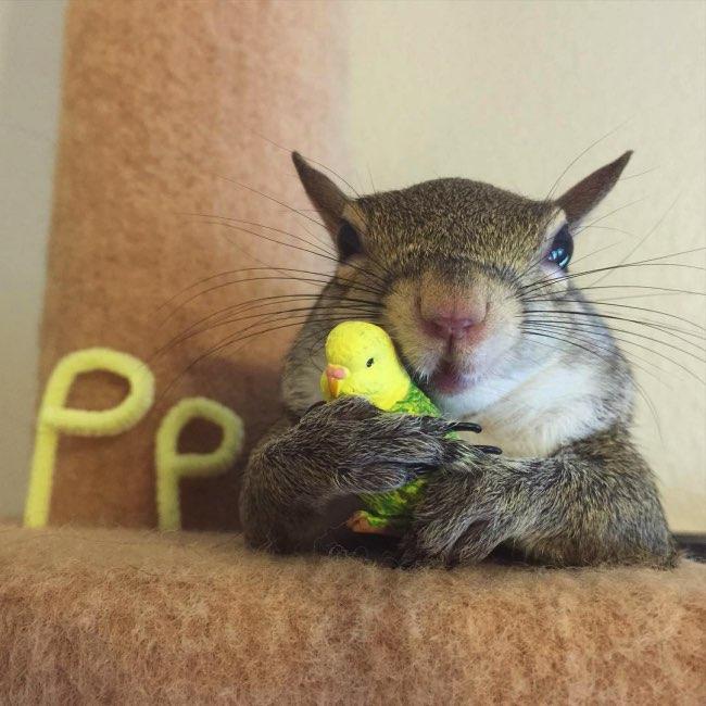 rescape ecureuil jill instagram 6 - Sauvé in Extremis cet Ecureuil Profite de sa Nouvelle Vie