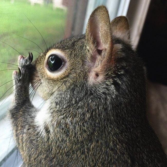 rescape ecureuil jill instagram 7 - Sauvé in Extremis cet Ecureuil Profite de sa Nouvelle Vie