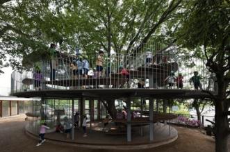 maternelle fuji zelkova japon arbre 10 331x219 - Dans cette Maternelle Un Arbre Legendaire fait le Bonheur des Enfants