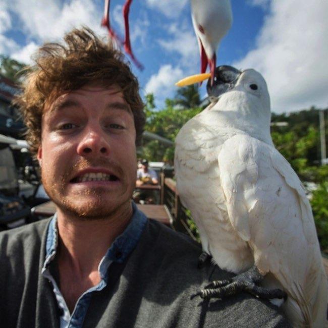 , Les Animaux Adorent faire des Selfies avec ce Photographe
