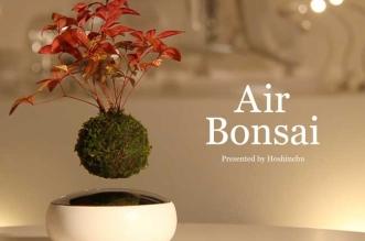 floating-bonsai-pot-levitation-arbre-1