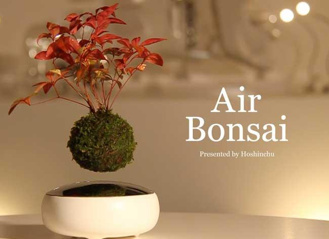 , Avec Bonsai Air Faites Flotter votre Bonsai dans l'Air (video)