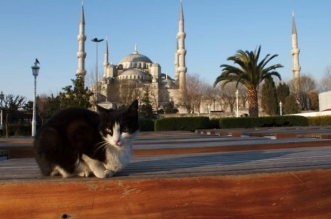istanbul-mosquee-ouvre-chats-rue-errants-7