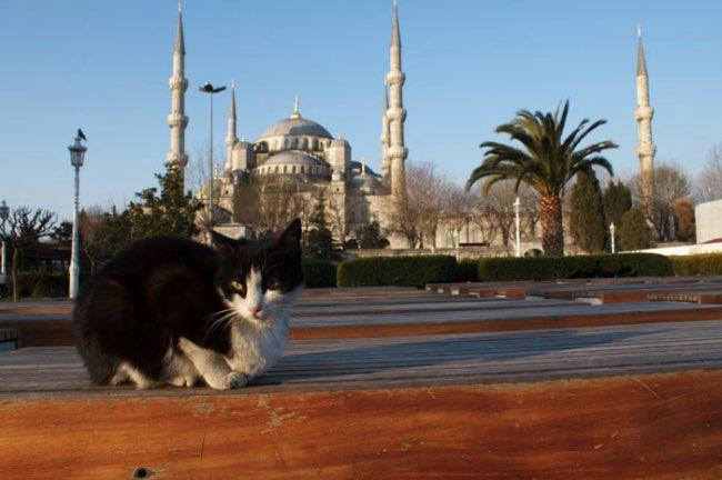 , A Istanbul une Mosquee Ouvre ses Portes aux Chats des Rues (video)